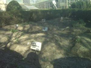 loc de veci gradina botanica