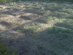 plante moarte gradina botanica